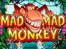 Логотип игр Mad Mad Monkey